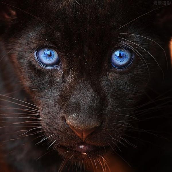 глаза18