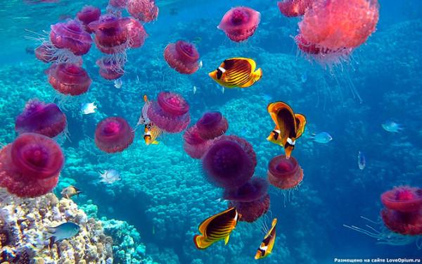 медузы17