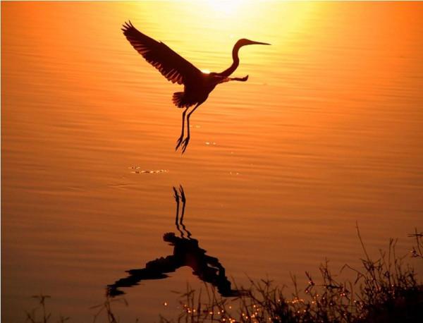 оранжевый закат и птица