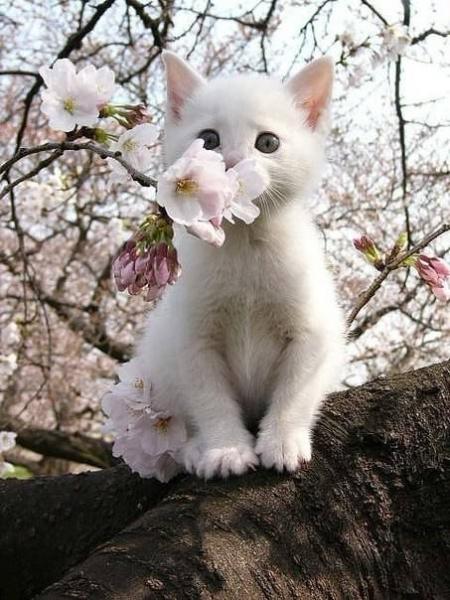 белый цвет - белый кот