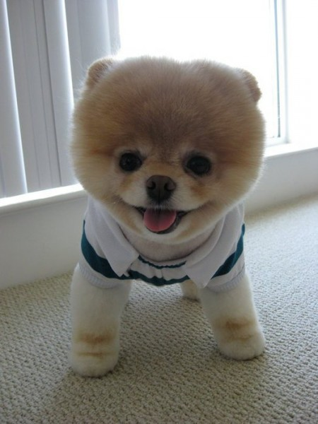 прелесть-щенок