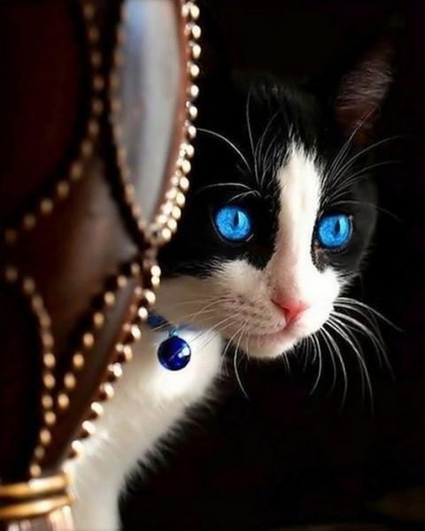 кот синеглазый