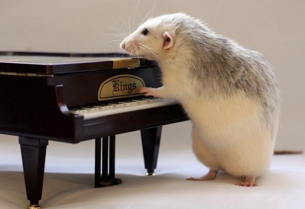 крыс.оркестр9