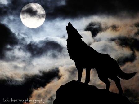 Одинокие волки2