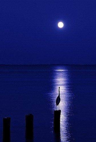серебрится лунная дорожка2
