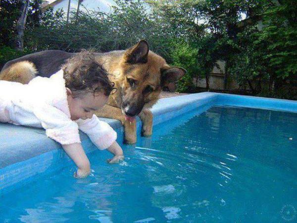 собака и малыш у бассейна