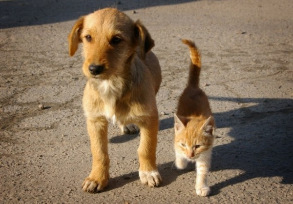 Мы - как кощка и собака