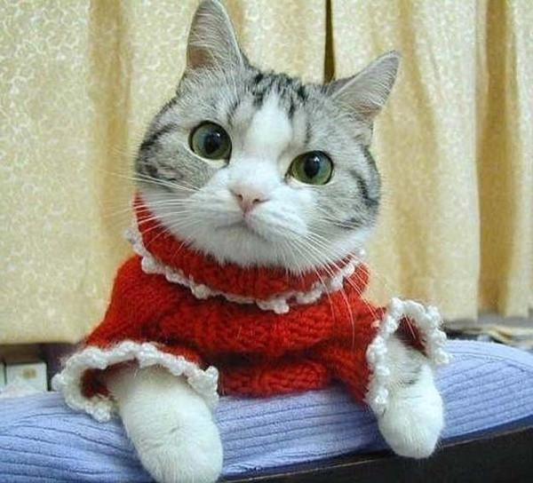кошка-модница