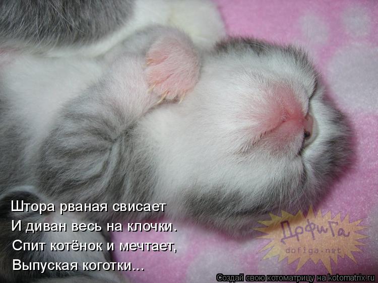 котенок спит1