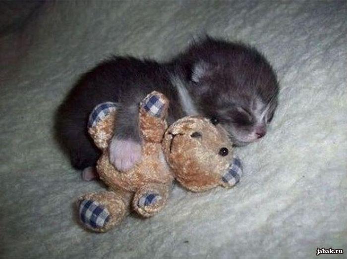 котенок спит17