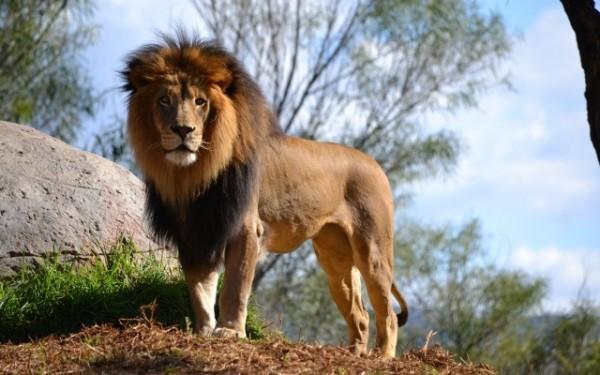 23 лев