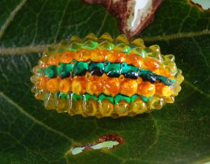 гусеница1