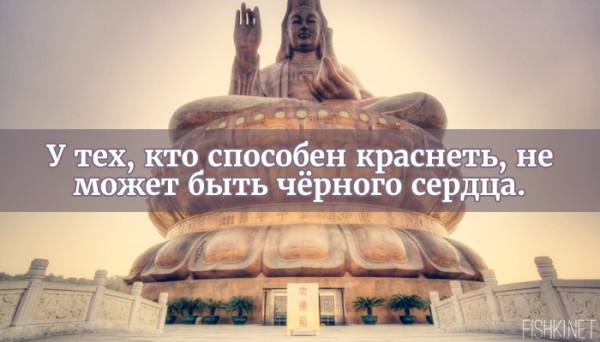 цитата22