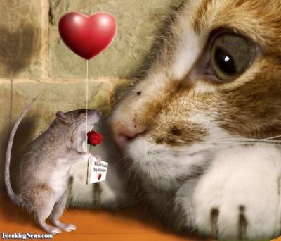 мне не по силам  - кошки-мышки и любовь