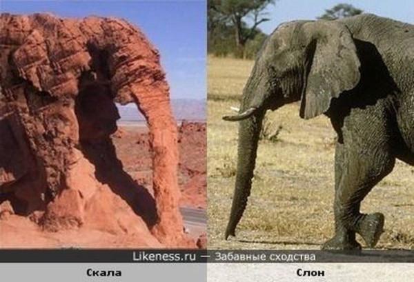 звери6 слон