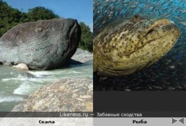 звери14 рыба