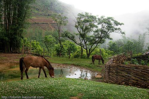 лошади у плетня