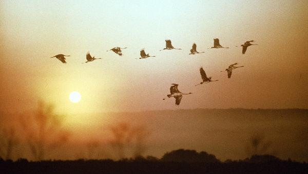 потянулись на юг перелетные птицы