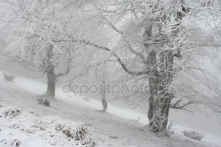 Насыпало снежку под Рождество