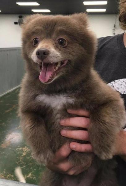 а ля медведь