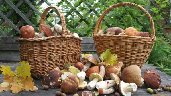 Ты любишь собирать грибы - полные корзины