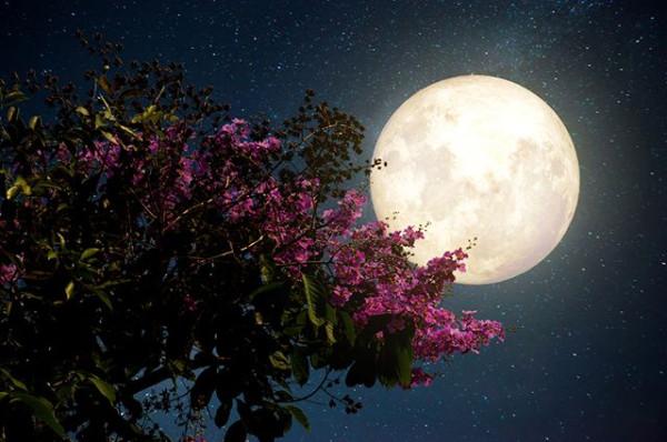 В ночном саду2