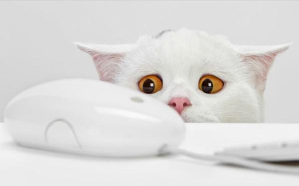 кот и комп.мышь