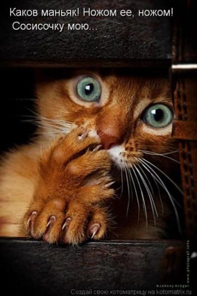 кот и сосиска -ужас