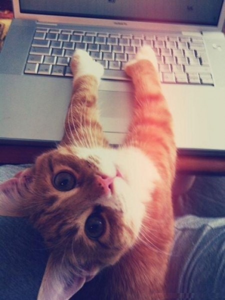 кот с клавиатурой