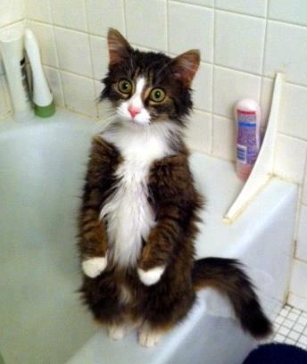 кот удивленный