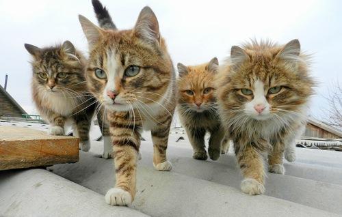 коты-братки