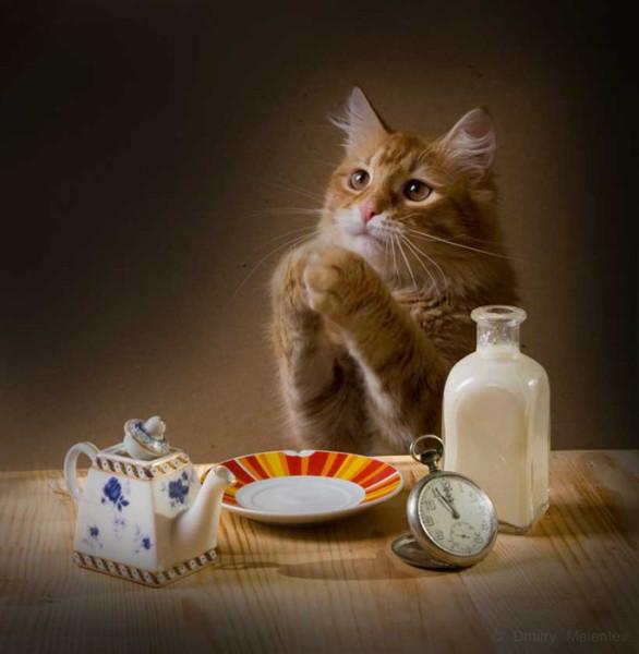 кошачья молитва