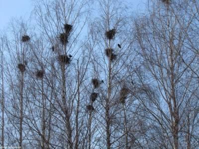 Пустые гнезда2
