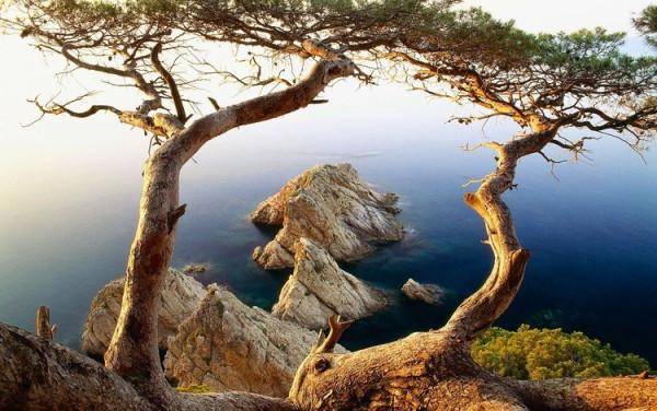 одинокое дерево1