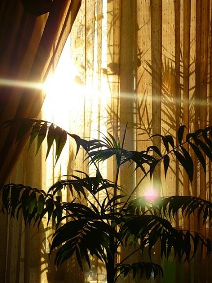 Потоки света бьют в окно