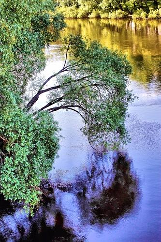 ивы у реки