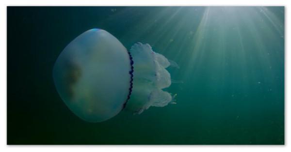 2а медуза корнерот