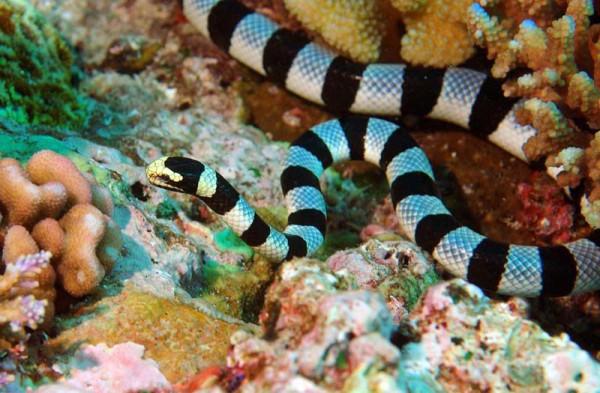 13 морская змея
