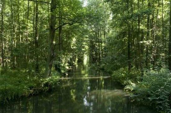 Волшебный сон лес