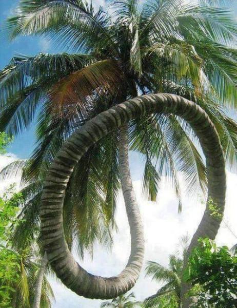4 пальма