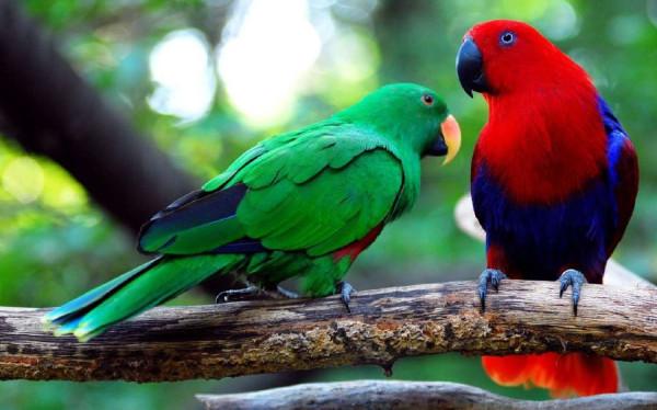 2 благородный зелено-красный попугай