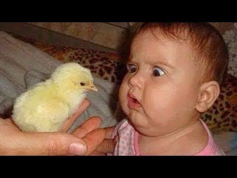 взгляд на цыпленка