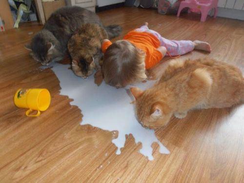 дети и кошки18