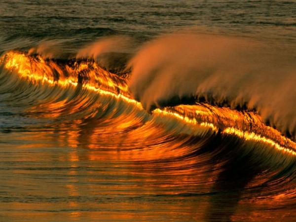 волна золотая
