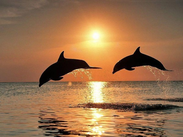 дельфины закат