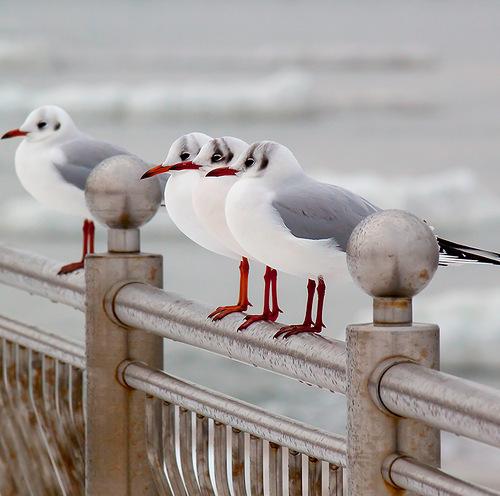 чайки на набережной