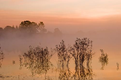 розовый туман над тростниковым озером