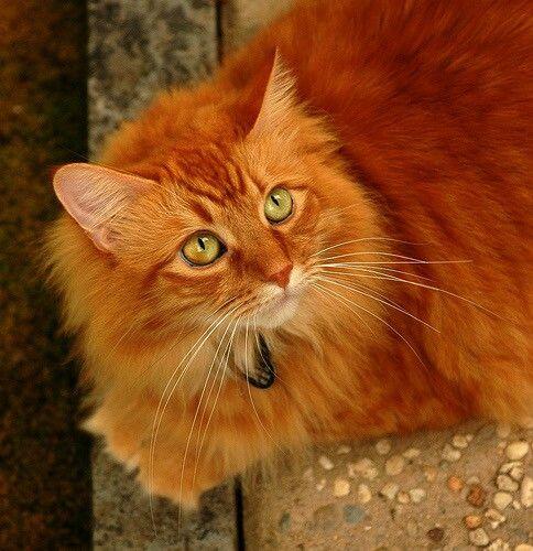 Мой котик Малахитовые глазки