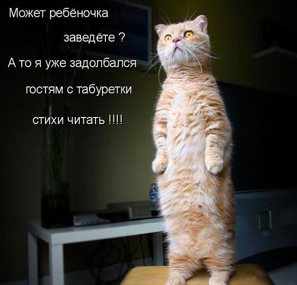 Кот на табуретке - стихи