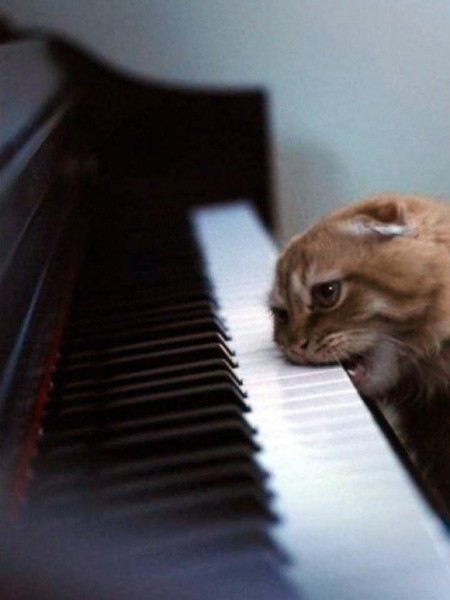 кот пианист увлекся